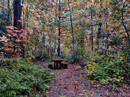 A Forest Picnic Table Stok Fotoğraf