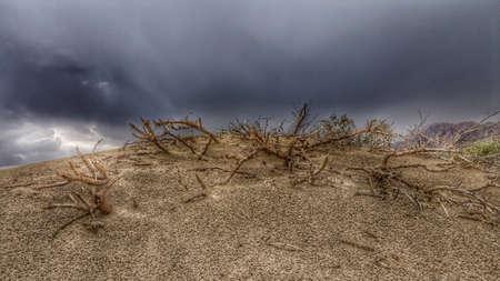 Sandy Desert Storm