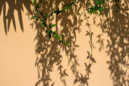 Beautiful patterned shadow of a tree with branches on a yellow wall of plaster. Abstract black shadow background of natural leaves tree branch.