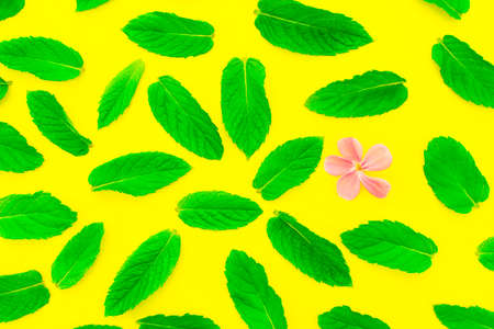 Pattern of fresh green mint leaves with one small flower on a yellow background. Top view. Nature background.