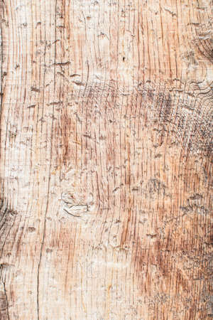 Nature old wood bark pattern or texture. Old rough tree, brown natural wooden background. Close up.
