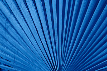Large palm leaf in blue color of the Sabal minor family. Natural tropical background, closeup.