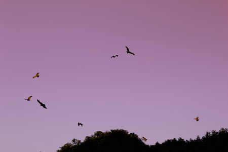Eagles flying in light pink morning sky. Abstarct background. Desktop screensaver