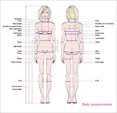 Wykres pomiaru ciała kobiety. Schemat pomiaru ludzkiego ciała do szycia ubrań. Postać kobieca: widoki z przodu iz tyłu. Wektor. Ilustracje wektorowe