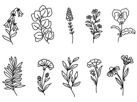 Botanical Floral Wildflowers Clipart. Summer Flowers and Plants. Vector illustration. 矢量图像