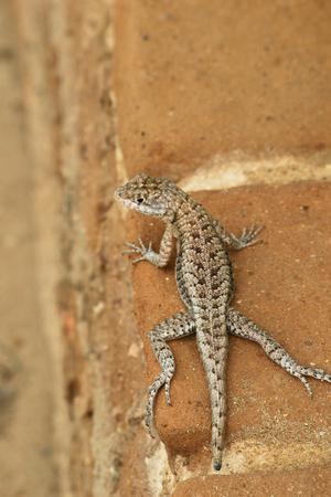 small brown lizard on the bricks