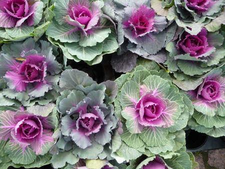 decorate: Decorate flowers Stock Photo