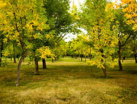 A photo of autumn trees in a park with green and yellow leaves.