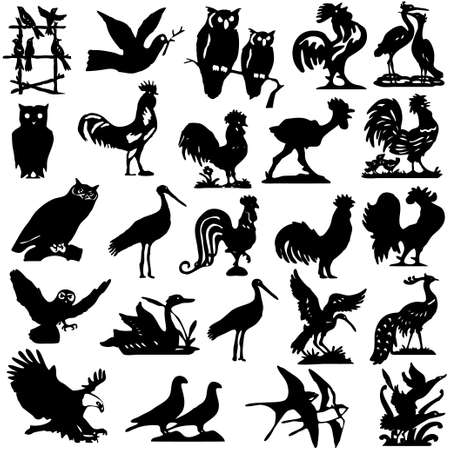 Pelican: illustration with different bird silhouettes collection isolated on white background   Illustration