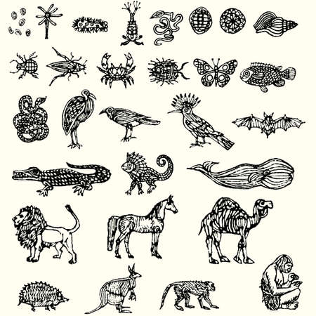 illustration with different animals collection isolated on white background  Vector