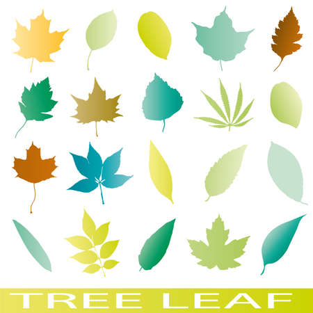 willow: Set of leaf icons vector tree ilustrations  Illustration