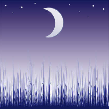 Abstract colorful illustration with dark forest silhouette illuminated by the light of the moon  Vector