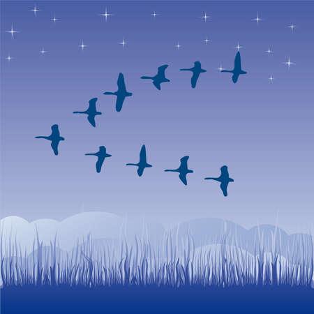 Birds migratory illustration cartoon Stock Vector - 6919064
