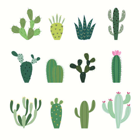 illustrate: Cactus collection in vector illustration
