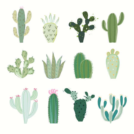 pera: colección de cactus en la ilustración vectorial Vectores