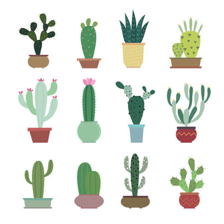 prickly: Cactus collection in vector illustration
