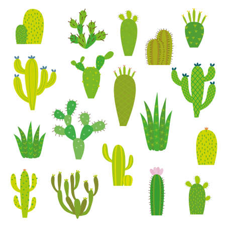 prickly pear: Cactus collection in vector illustration