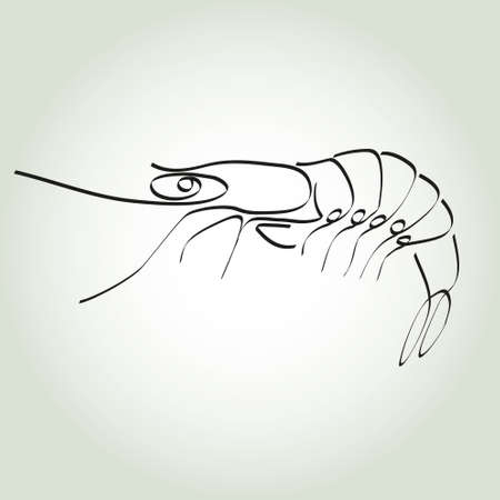krill: Shrimp in minimal style vector line Illustration