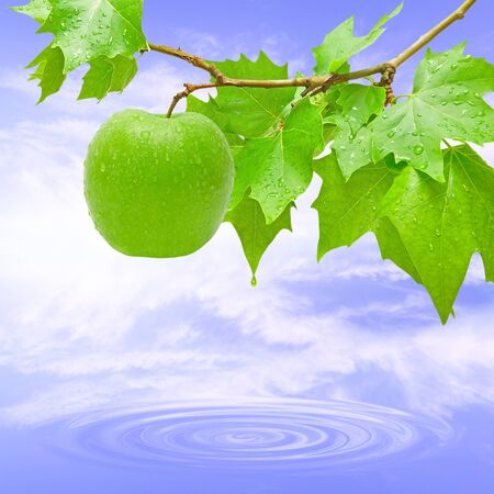 thinness: Green and fresh apple in the tree on the lake.