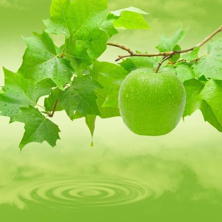 manzana agua: Apple natural en el árbol en un lago.