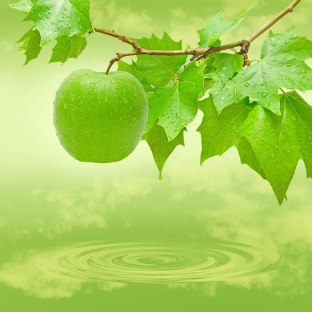 Green and fresh apple in a tree.