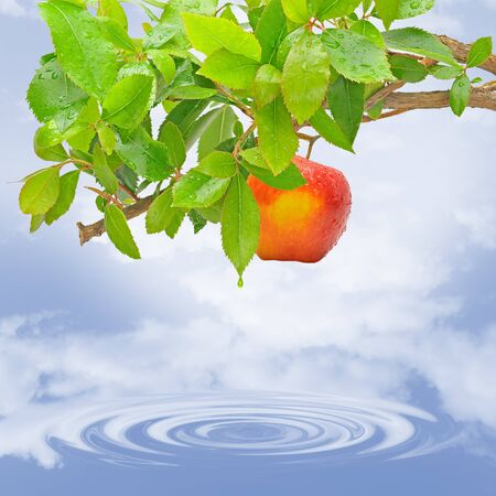 thinness: Tree with red apple on the lake.