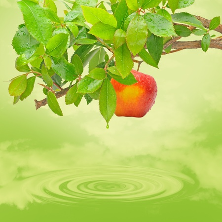 Tree with apple on a green lake. Stock Photo
