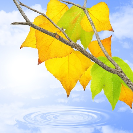Green, yellow and orange leaves in october. Stock Photo