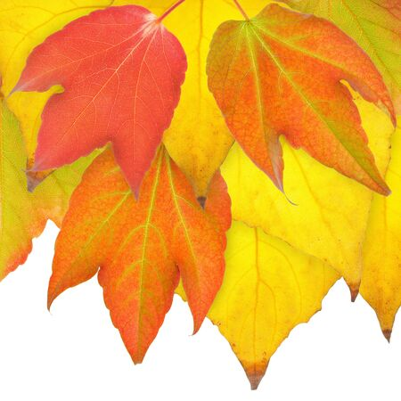 Red, yellow and orange leaves in November. Stock Photo