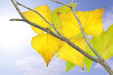 Tree with yellow and green leaves in fall. Stock Photo - 10871068