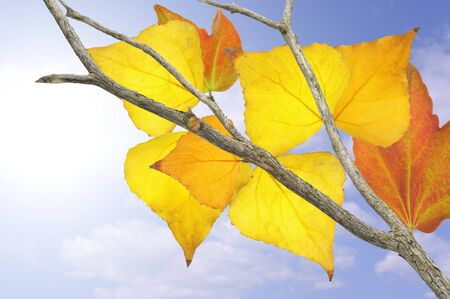 Yellow, orange and red leaves in fall. Stock Photo - 10871066