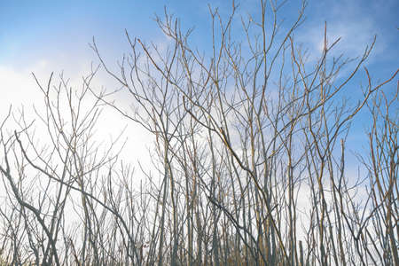 A few dry branches are silhouetted against the blue sky in an abandoned place