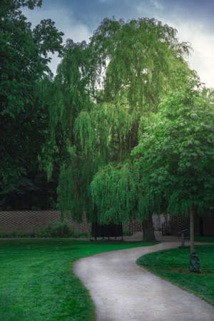 A weeping willow in a park on a summer afternoon