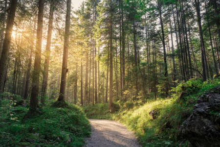 ** Trees and path of a natural area of ?? the Bavarian Alps ** Sunlight seeps through the trees in the wooded area in southern Germany during a sunny summer afternoon Stockfoto