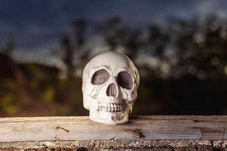 Decorative skull resting on a wood**Skull resting on the edge of a window. Blurry outdoor background. Side light of a flash mounted on a softbox