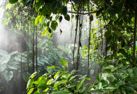 tropical rainforest: Rainforest