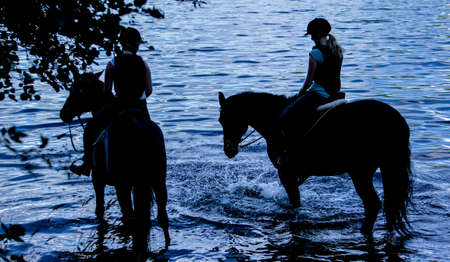 Horses bathing silhouette