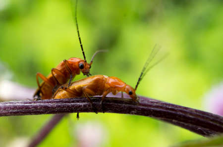 Insects in garden
