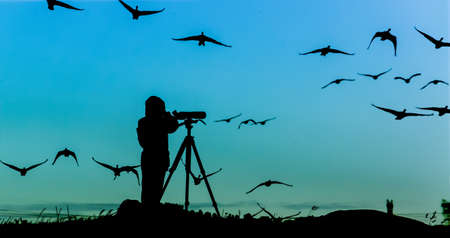 bird watcher: Bird Watcher Silhouette