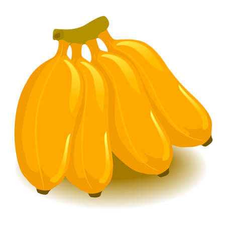 Vector Illustration of Bunches of Banana
