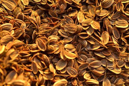 fennel seeds: fennel seeds