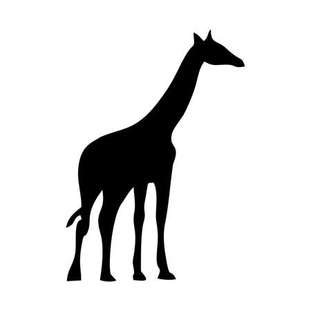 camelopardalis: Giraffe silhouettes on the white background Illustration