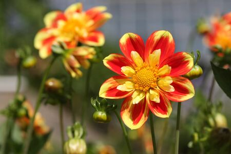 Bright and sunny picture of beautiful flower in warm colours. Stock Photo