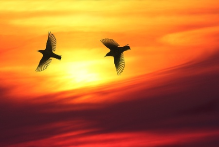 Two birds flying over sky in sunset, warm and beautiful cloudscape in background. Stock Photo