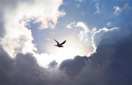 Bird flying in the sky with a dramatic cloud formation in the background. Light shining trough which gives a symbolic value of life and hope. photo