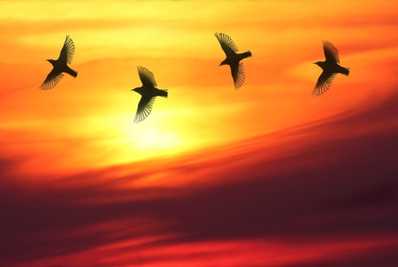Four birds chasing each other in front of beautiful sunset.