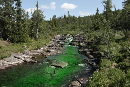 contamination: Polluted creek with green harmful water. Stock Photo