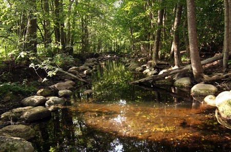 Beautiful calm river in green spring forest.