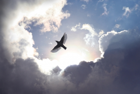 A bird spreads its wings and fly to heaven trough dramatic cloudscape. Stock Photo