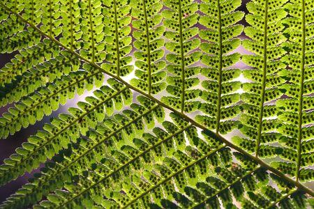 Macro shot of fern leaves with green beautiful pattern. Stock Photo
